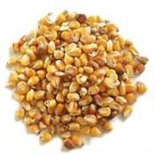 Apetit / Kukuřice