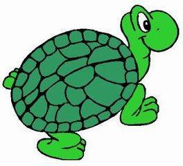 turtle10_m.jpg