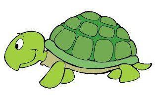 turtle19_m.jpg